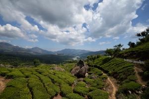 inde plantation de riz