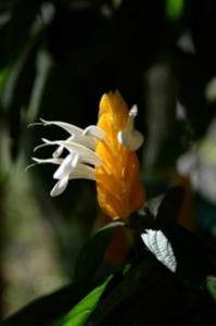 Candle flower (qui se voit la nuit)