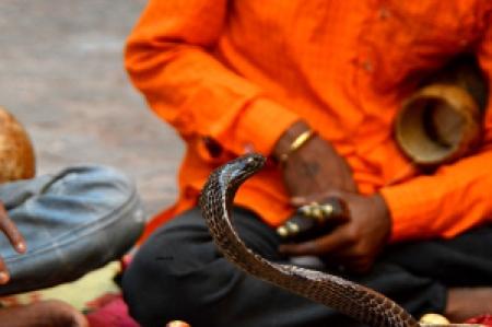 Viatori rajasthan Jaipur serpent